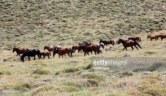 Cavallo : Foto stock