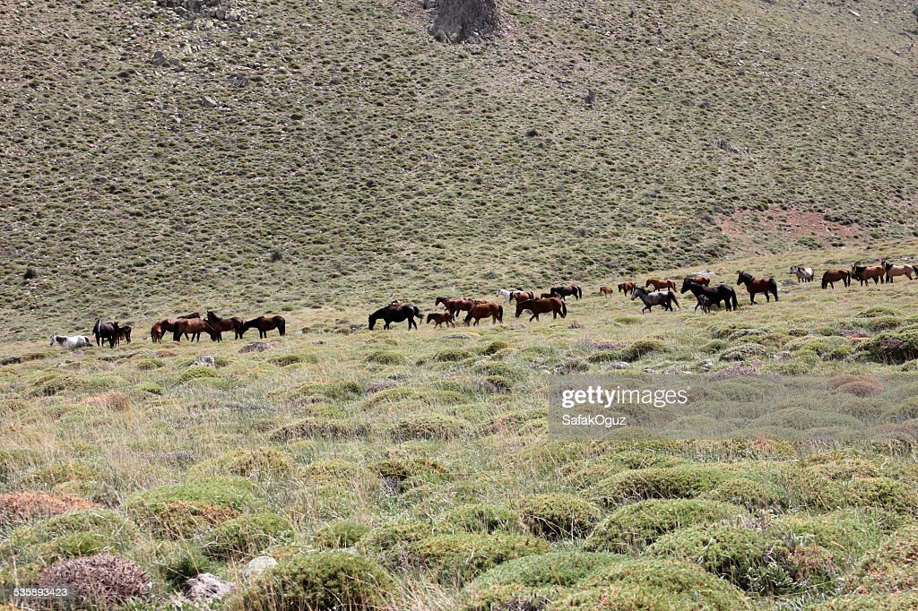 Horse : Bildbanksbilder