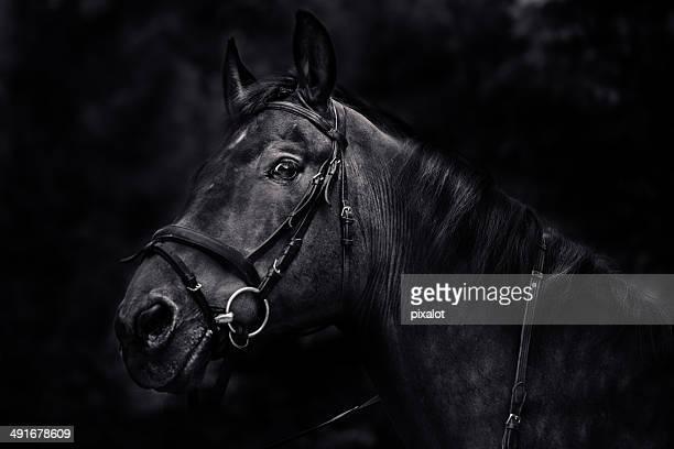 Horse Portrait B&W