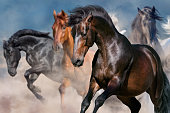 Horse portrait in herd in motion in desert dust