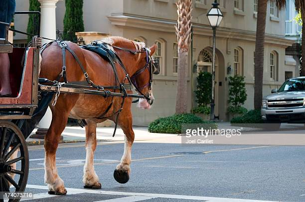 Horse-drawn carriage in Charleston, South Carolina