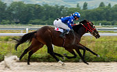 Horse race in Pyatigorsk in Russia.