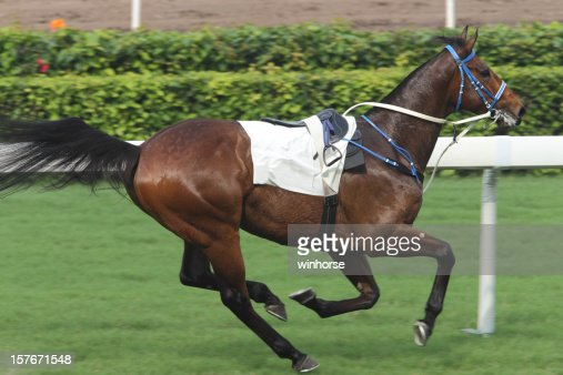 Horse Racing Accident