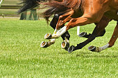 Horse racing action, hooves, legs, tails and grass