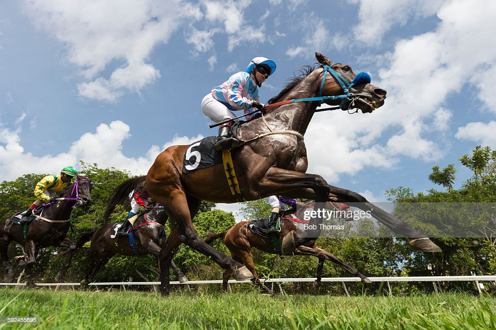 Horse racing stock photo getty images for Thoroughbred tattoo lookup