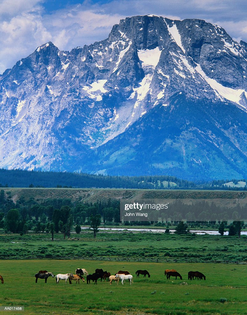 Horse ranch in grand teton wyoming stock photo getty images for Grand ranch