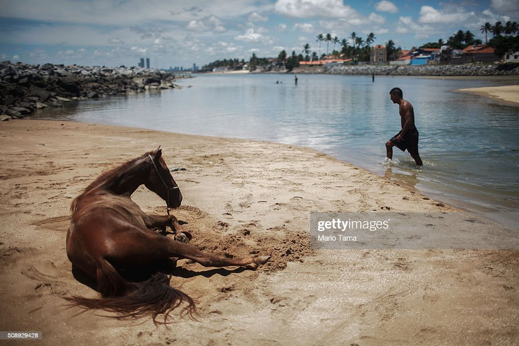 A horse rests in the sand as a man walks through the water along the Atlantic ocean on February 7, 2016 in Olinda, Pernambuco state, Brazil. Pernambuco state is the state that has seen the most cases of microcephaly in Brazil, a condition which has been tangentially linked to the mosquito-borne Zika virus.