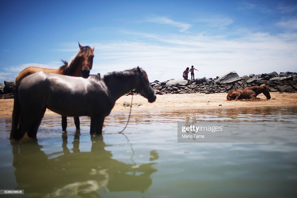 A horse rests on the beach as others stand in the water on February 7, 2016 in Olinda, Pernambuco state, Brazil. Pernambuco state is the state that has seen the most cases of microcephaly in Brazil, a condition which has been tangentially linked to the Zika virus.