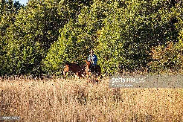 Horse rider with mules and dog in field