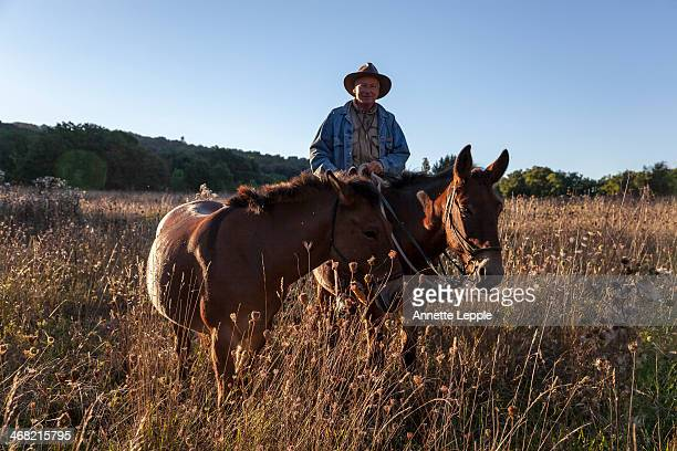 Horse rider with mules in field