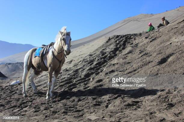 Horse Riding On Desert