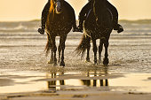 Horse riding on the beach at sunset, France