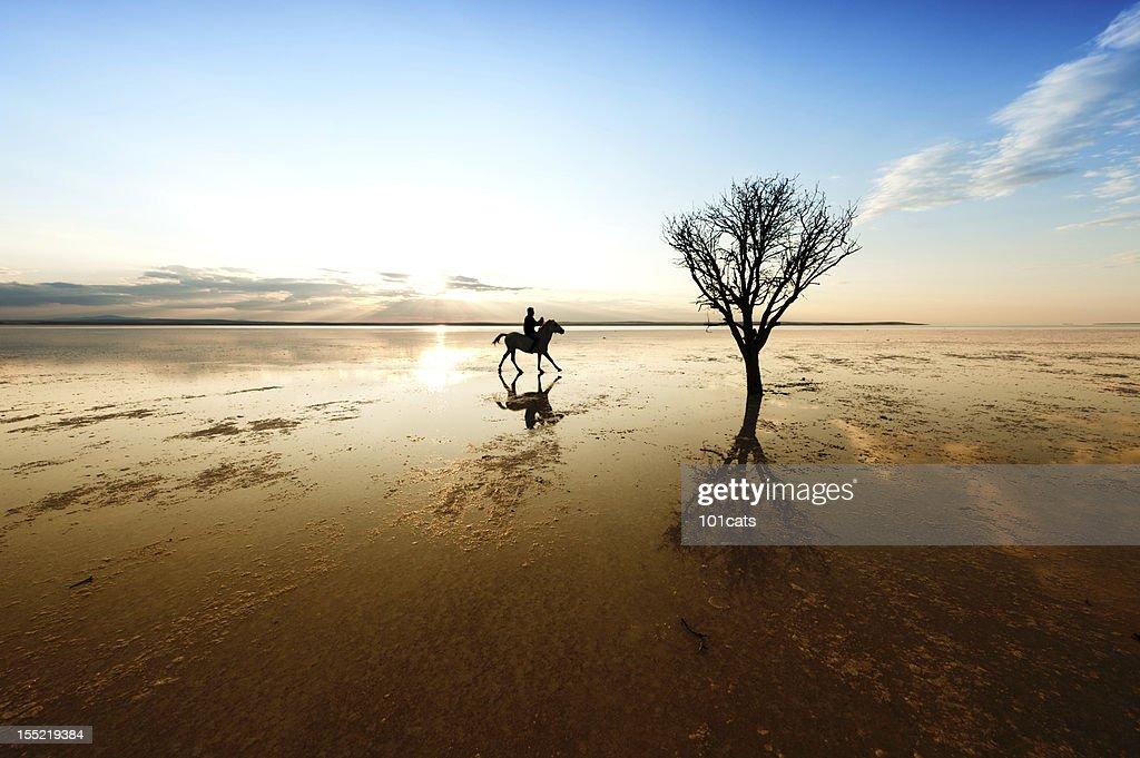 horse riding : Stock Photo