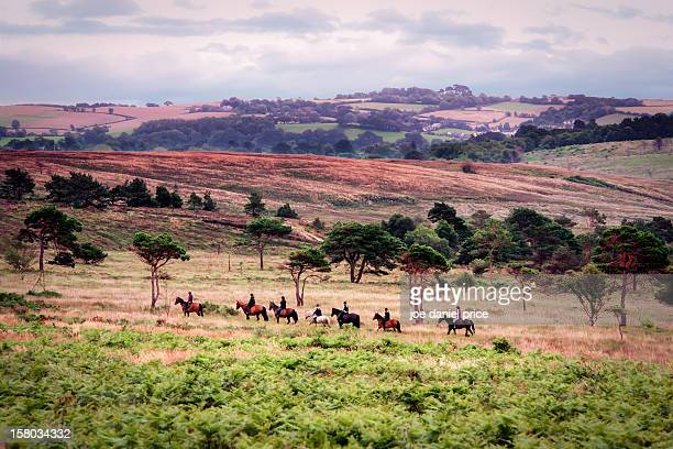 Horse riding, Woodbury Common, Exmouth, England