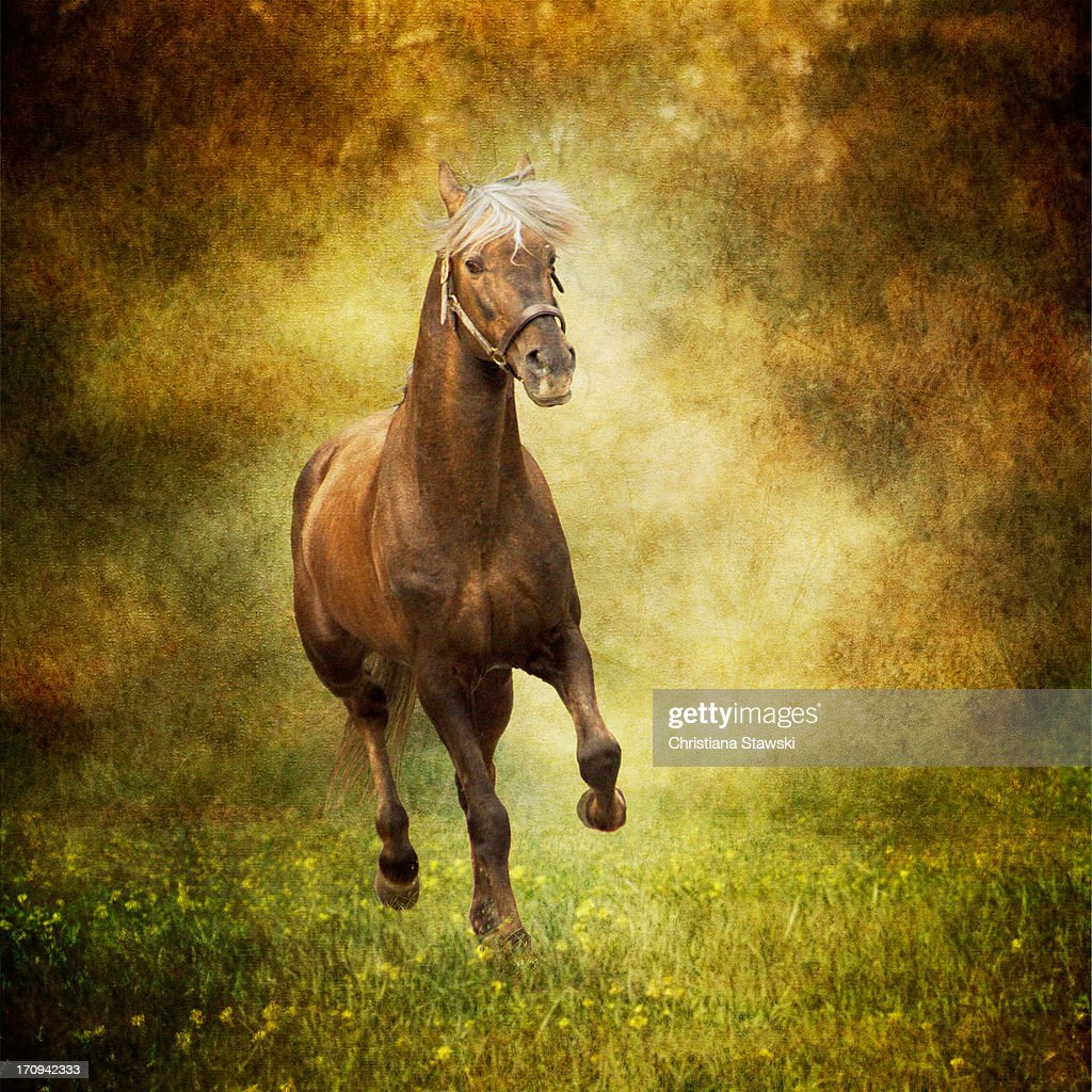 Horse running free in meadow