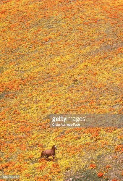 Horse Running in a Flowering Meadow