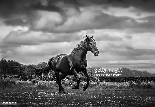Horse Running In Field