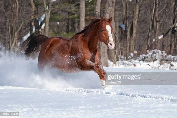 Cavalo de corrida na neve fresca iluminado pela luz, força e energia