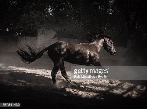 Horse Running In Stable