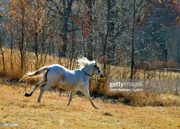 Horse Running On Grassy Field By Trees