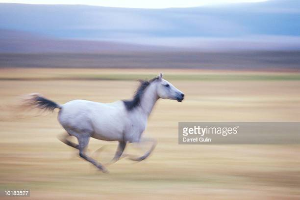 Horse running (blurred motion)