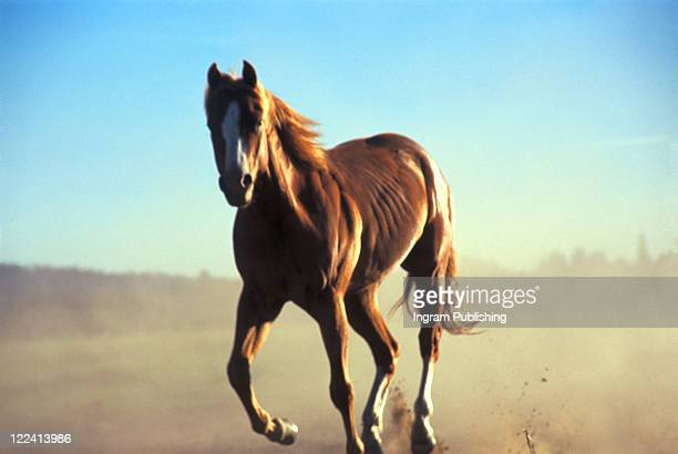A Horse running wild near Sunriver, Oregon