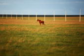 A horse runs on the Huhenuoer Grassland on August 27 2009 in Hulun Buir Inner Mongolia Autonomous Region China Hulun Buir with an area of 250000 sq...