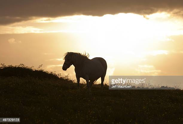 A horse silhouetted at sunset.