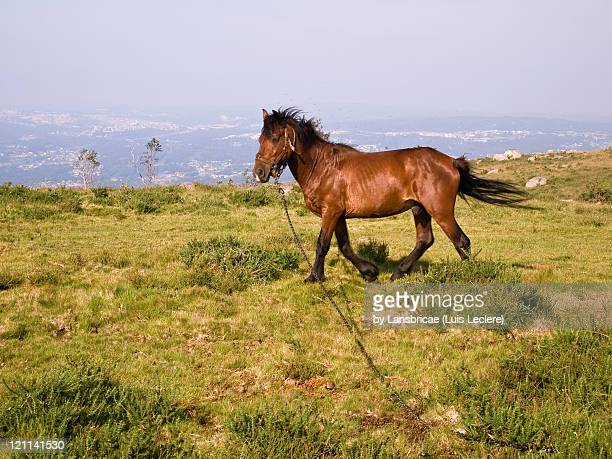 Horse stacked in Monte Oleiron