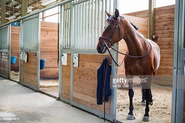 Horse standing at door of stable