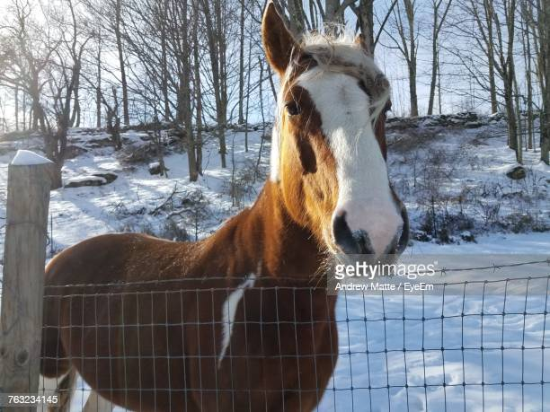 Horse Standing By Fence On Snow Field