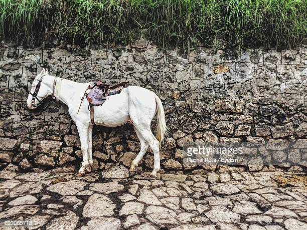 Horse Standing By Stone Wall