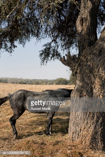Horse standing in field : Stock Photo