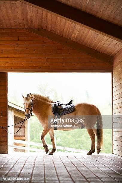 Horse standing in stable doorway