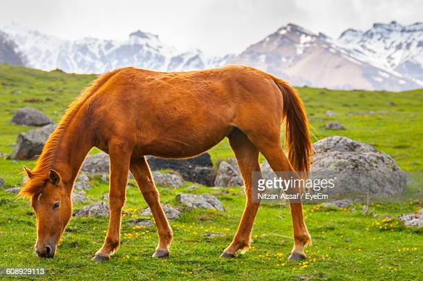 Horse Standing On Grassy Field