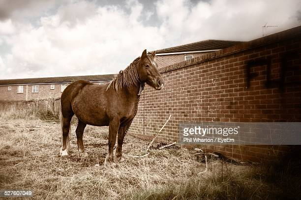 Horse Standing On Ranch Against Cloudy Sky
