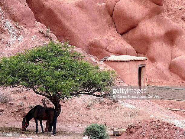 Horse standing under tree