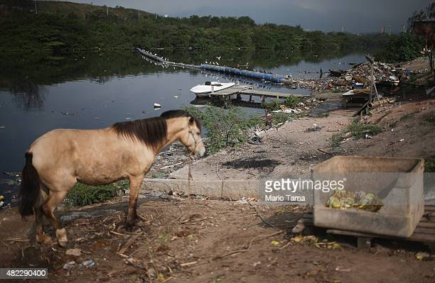A horse stands along the polluted Cunha canal which flows into the notoriously polluted Guanabara Bay site of sailing events for the Rio 2016 Olympic...