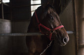 A horse stands in a barn in preparation for the Soma Nomaoi festival in Minamisoma Fukushima Prefecture Japan on Sunday July 24 2016 Every July...