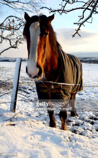 A horse stands in a snow covered field in Denny Scotland as northern Britain today bore the brunt of wintry weather that could bring almost a foot of...