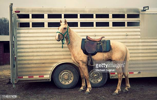 A horse stands in front of a horse trailer.
