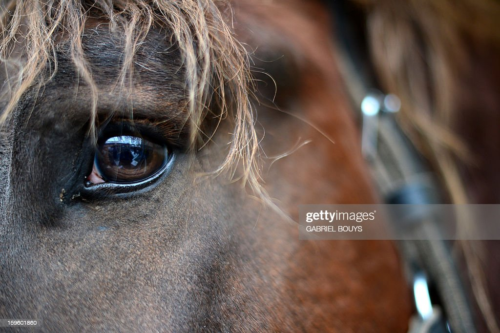 A horse stands in front of the Saint Peter Basilica in Vatican, during a traditional day of blessing of the animals all over Italy, on January 17, 2013. AFP PHOTO / GABRIEL BOUYS