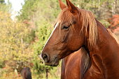 Horse, Animal, Animal Eye, Mammal, One Animal, beauty in nature, brown horse, Slovenia