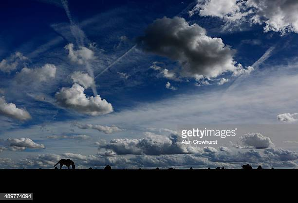 A horse stops for a pick of grass on the way back to the stables after racing at Newmarket racecourse on September 24 2015 in Newmarket England