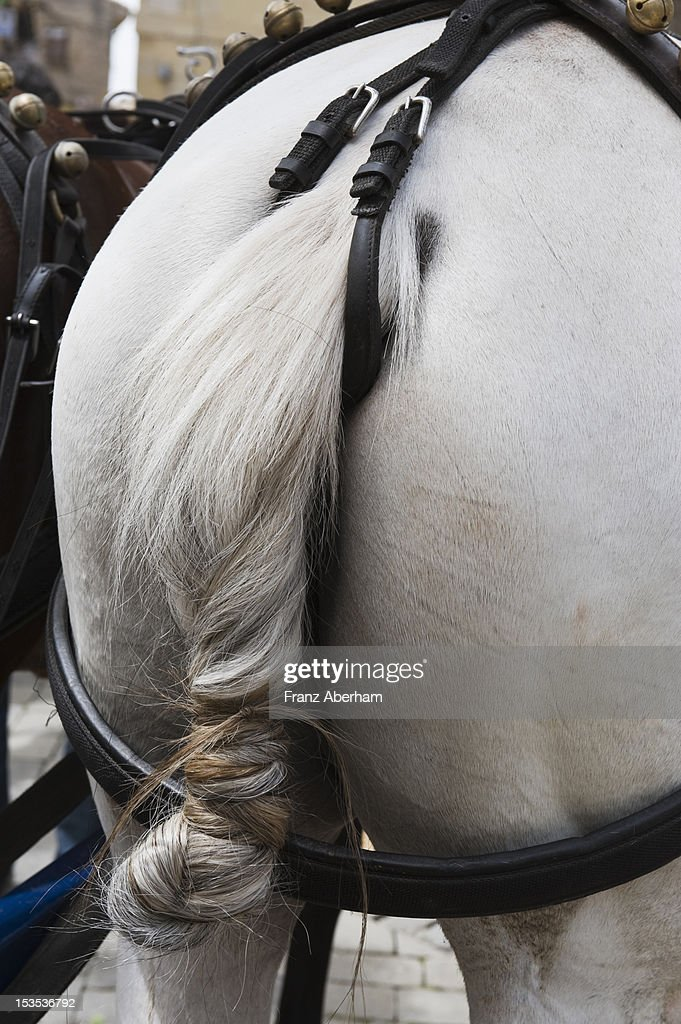 Horse tail : Stock Photo