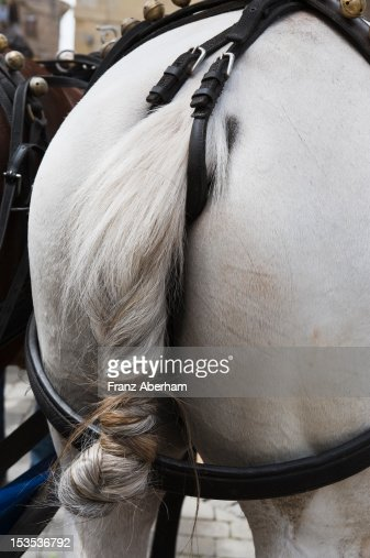 Horse tail : Foto stock