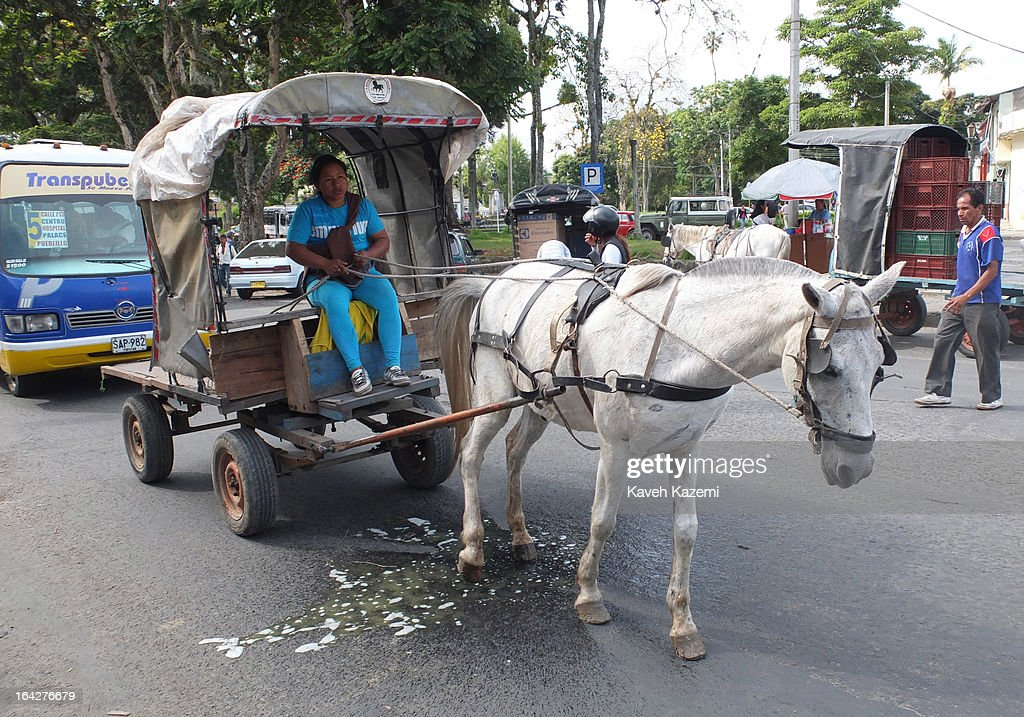 A horse transporting goods pulling a wagon in Barrio Bolívar market urinates on the tarmac while waiting behind the traffic light on January 23, 2013 in Popayan, Colombia. Horse carriages are widely used as means of transportation of goods throughout Colombia cities and its capital Bogota.