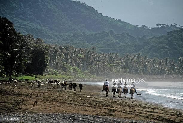 horse trip in costa rica