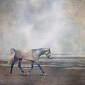 Horse trotting on beach