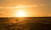 A horse walking infront of a setting sun in Wyoming, USA